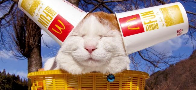 топ кот
