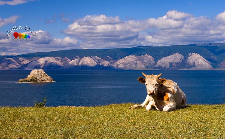Сколько км озеро Байкал