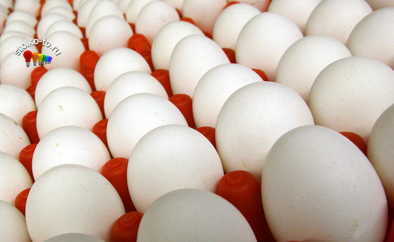 Сколько можно есть яиц в день