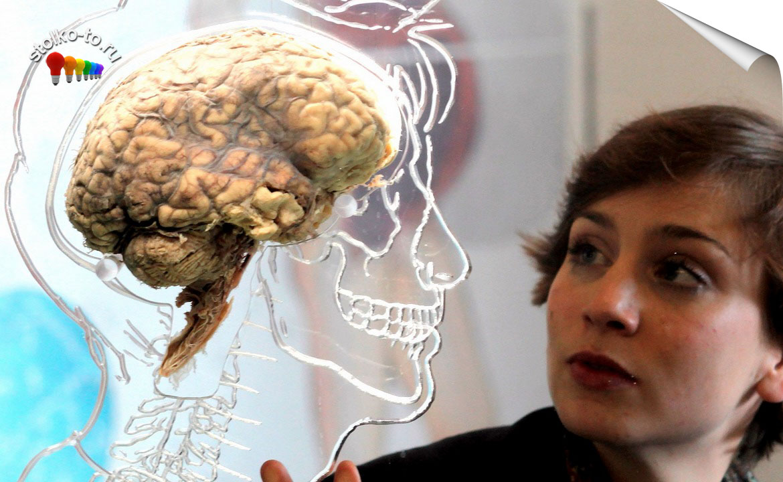 Сколько весит мозг человека