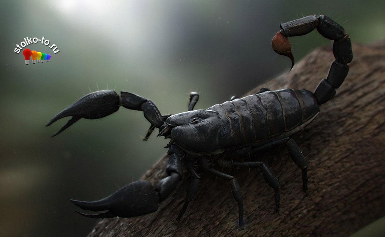 Насколько опасен яд скорпиона