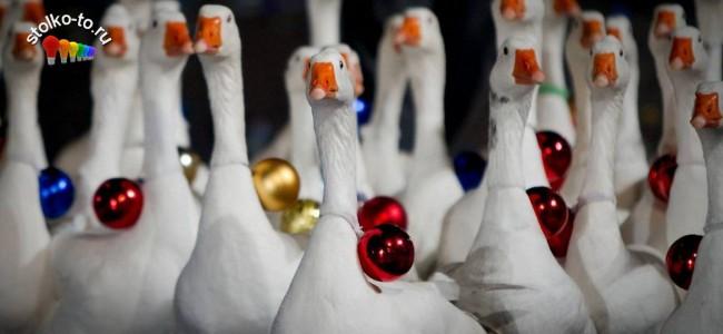 Сколько калорий в рождественском гусе