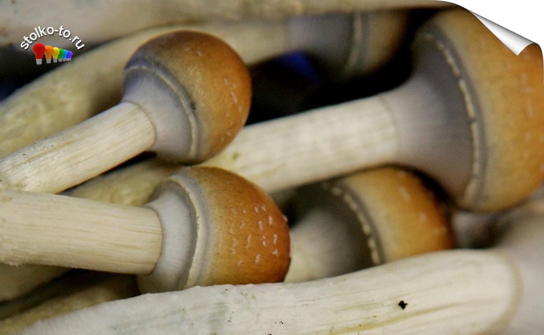 Чем опасны грибы