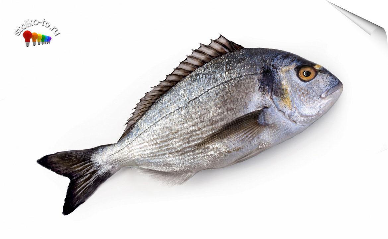 Сколько калорий в морской рыбе