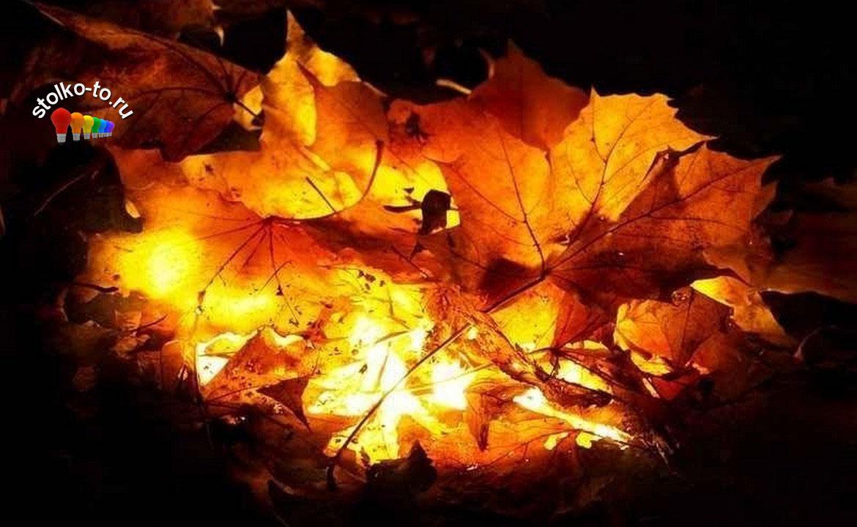 Чем опасно сжигание листьев