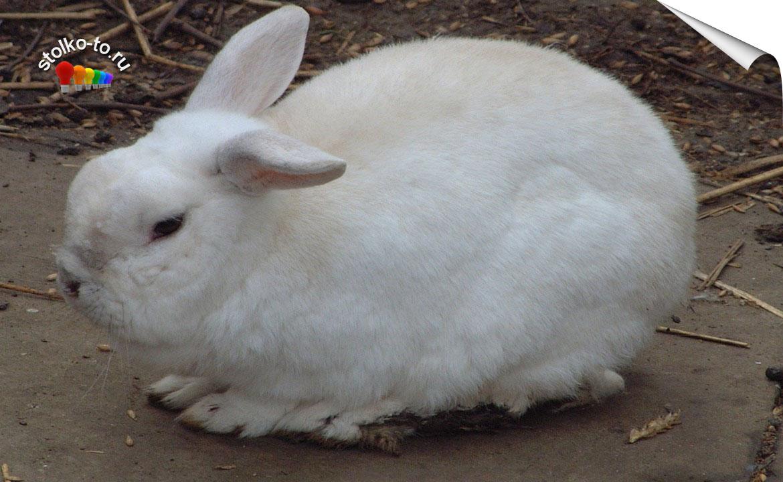 Сколько весит заяц